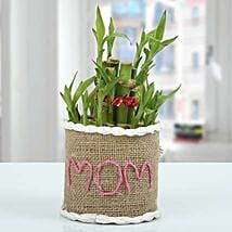 Lucky Bamboo Plant Express: Mother's Day Plants