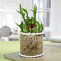 Lucky Bamboo Plant For Mom: Lucky Bamboo for Diwali