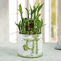 Lucky Bamboo Plant to Mom: Send Womens Day Gifts for Mother