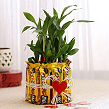 Lucky Bamboo with Five Star Chocolates Combo: Order Plants n Chocolates