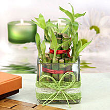 Lucky Two Layer Bamboo Plant: Boss Day Gifts