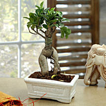 Marvellous Bonsai Plant: Gifts for 75Th Birthday