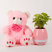 Musical Syngonium Plant And Teddy Bear Combo: Soft Toys for Christmas