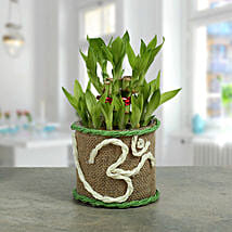 Om Two Layer Bamboo plant: Send Diwali Gifts for Her