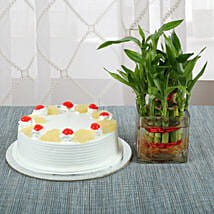 Pineapple Cake With Lucky Bamboo Plant: Send Christmas Gifts to Family