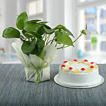 Pineapple Cake With Money Plant: Holi Cakes