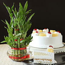 Pineapple Cake With Three Layer Bamboo Plant: Lucky Bamboo for Teachers Day