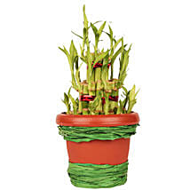 Pot Of Luck: Send Lucky Bamboo to Hyderabad