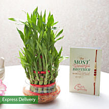Rakhi With Lucky Bamboo Plant: Send Rakhi to Pune