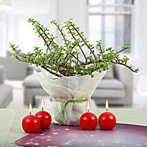 Red Candle Balls with Jade Plant: Send Diwali Gifts for Him