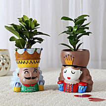 Set of 2 Ficus Compacta In King Queen Pots: Plants Delivery