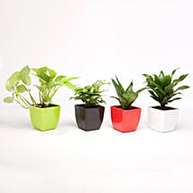 Set of 4 Green Plants in Beautiful Plastic Pots: Buy Indoor Plants