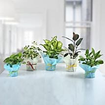Set of 5 Refreshing Green Plants: Potted Plants