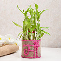 Sincerely Yours Mom Lucky Bamboo Plant: Plants to Delhi