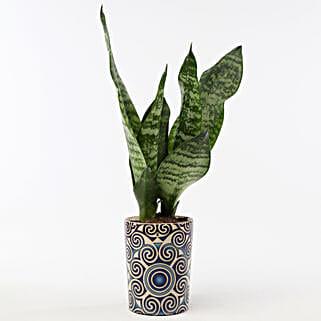 Snakeskin Sansevieria In Blue Ceramic Pot: Good Luck Plants for Boss Day