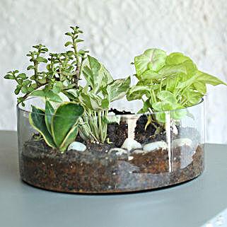 Syngonium And Jade Terrarium: