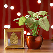 Syngonium Plant & Gold Plated Foil Ganesha: Lucky Bamboo Hyderabad