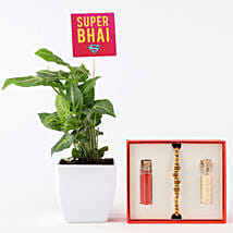 Syngonium Plant With Tan Coloured Rakhi: Rakhi Gifts to Gurgaon