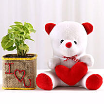 Syngonium Plant in I Love You Vase & Teddy Bear: Gifts for Teddy Day