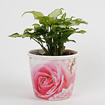 Syngonium White Plant in Stoneware Floral Pot: Send Indoor Plants
