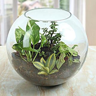 Terrarium For Healthy Air: Terrariums Plants