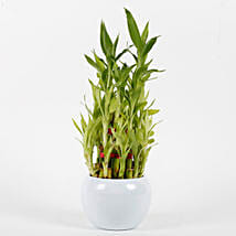Three Layer Bamboo Plant in Orchid Metal Pot: Spiritual and Vastu Plants