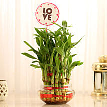Three Layer Bamboo in Vase with Love Tag: Plants to Bengaluru