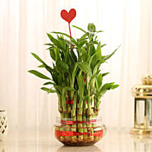 Three Layer Lucky Bamboo With Heart Shaped Tag: Valentines Day Lucky Bamboo
