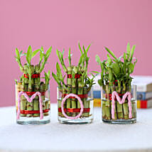 Three Lucky Bamboo Plants For Mom: Mothers Day Gifts to Mumbai