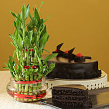 Truffle Cake N Three Layer Bamboo Plant: Send Gifts for Parents Day