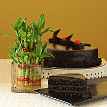 Truffle Cake N Two Layer Bamboo Plant: Send Gold Rakhi