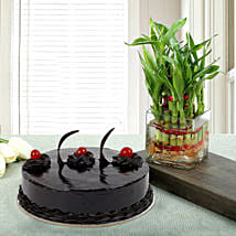 Truffle Cake N Two Layer Bamboo Plant: Send Flowers to Anantpur