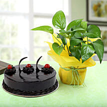 Truffle Cake With Money Plant: Holi Special Cakes