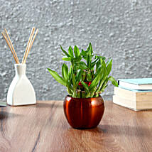 Two Layer Bamboo Plant in Brass Orchid Metal Pot: Office Desk Plants
