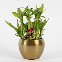Two Layer Bamboo Plant in Copper Orchid Metal Pot: Lucky Bamboo Plants