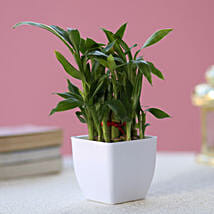 Two layer Bamboo Plant: Send Gifts to Fatehabad