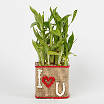 Two Layer Lucky Bamboo in a Glass Vase I Love You: Karwa Chauth Gifts