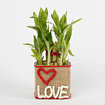 Two Layer Lucky Bamboo in a Glass Vase Love: Plants - Same Day Delivery