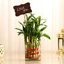 Two Layer Lucky Bamboo With Love You Tag: Send Plants to Mumbai