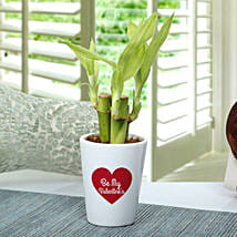 Valentine Love Bamboo Plant: Send Plants for Valentines Day