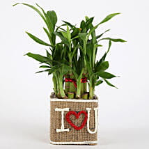 Valentine Special 2 Layer Lucky Bamboo In I Love U Vase: Send Plants to Mumbai