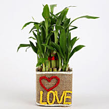 Valentine Special 2 Layer Lucky Bamboo In Love Vase: Plants to Mumbai