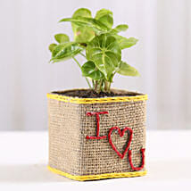 Syngonium Plant in I Love You Vase: Valentine Same Day Delivery Gifts