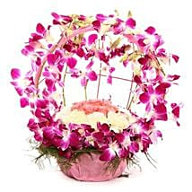 Vibrant Orchid Celebration: Send Wedding Gifts to Raipur
