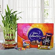 Yummy Chocolates N Three Layer Bamboo Plant: Order Plants n Chocolates