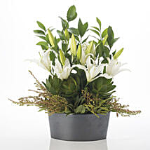 Harmonious Lilies: Get Well Soon Gifts to New Zealand