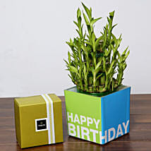 3 Layer Bamboo Plant and Patchi Chocolates For Birthday: Indoor Plants in UAE