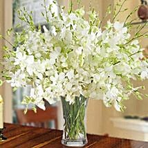 40 White Orchid Arrangement: Same Day Condolence Flowers in UAE