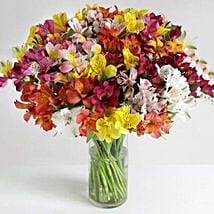 32 British Alstroemeria: Gifts to Leicester