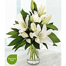Pure White Lilies: Send Flowers to UK